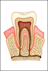 Root Canal Therapy in Bloomingdale & Glendale Heights